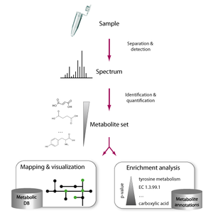 Functional interpretation of metabolomics data